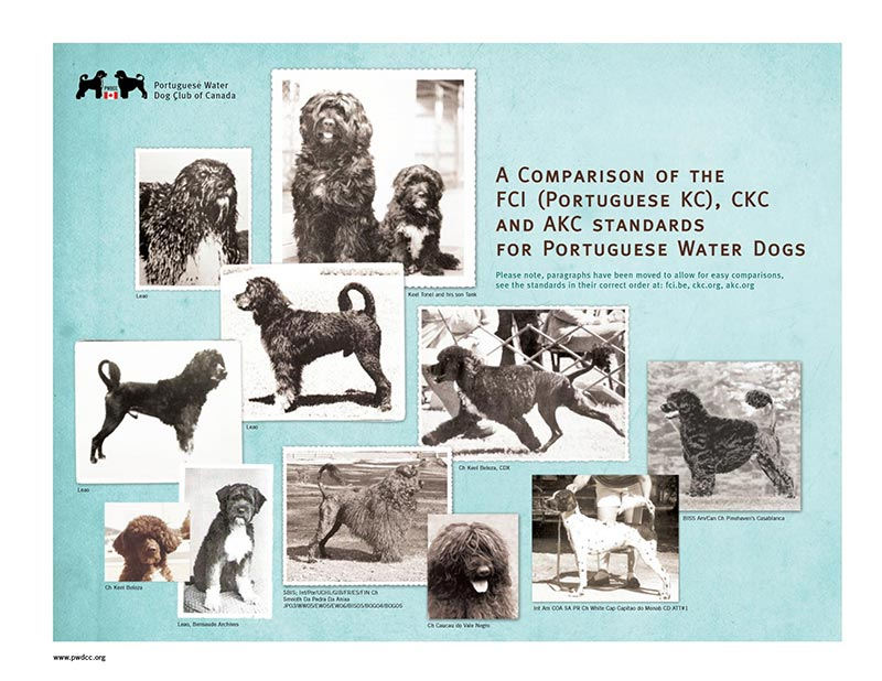 A Comparison of the FCI, CKC and AKC Standards for Portuguese Water Dogs