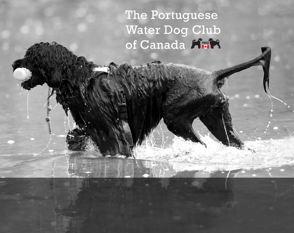 The Portuguese Water Dog Club of Canada